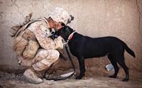 เจาะลึกหัวใจน้องหมา ทำไมถึงซื่อสัตย์กับมนุษย์มากที่สุด
