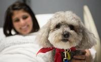 3 โรคร้ายของมนุษย์ ที่สุนัขสามารถรับรู้และช่วยเตือนเราได้