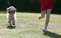 เทคนิคง่าย  ๆ ให้น้องหมาเดินตามเราโดยไม่ต้องใส่สายจูง