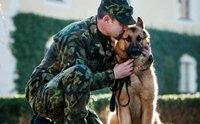 รวมพล 10 สายพันธุ์น้องหมามีความซื่อสัตย์กับเจ้าของมากที่สุด