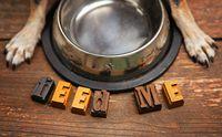 5 สารอาหารพิชิตโรคผิวหนังในสุนัข