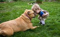 10 สัญญาณน้องหมาบอกว่า จะภักดีเราจนวันสุดท้ายของชีวิต