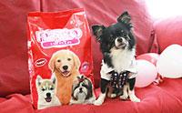เพ็ทโต อาหารสุนัขเกรดพรีเมียม สำหรับสุนัขพันธุ์เล็กทุกช่วงวัยในถุงเดียว