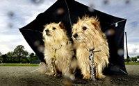 5 โรคเสี่ยงของน้องหมาในหน้าฝน...ที่เจ้าของมักมองข้ามไป