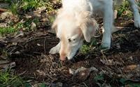 น้องหมาชอบกินดิน ผิดปกติรึเปล่านะ? ไปตามหาคำตอบกัน