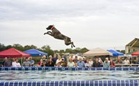 5 สายพันธุ์น้องหมาเก่งกาจกิจกรรมทางน้ำมากที่สุด!