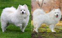 ไขความลับ รู้ไหมน้องหมาหน้าเหมือนกันแต่ต่างสายพันธุ์ก็มีนะ!!