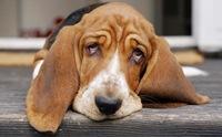 ไขปมลับ ปัญหาอาเจียนและท้องเสียในสุนัขที่หลายคนอยากรู้