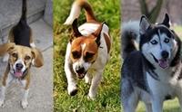 เข้าใจปัญหาพฤติกรรมของ 3 สายพันธุ์น้องหมาสุดแสบ
