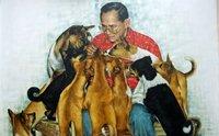 สายธารพระเมตตาของในหลวง ร.9 ที่มียังสุนัขและสัตว์ป่วย
