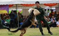 ในหลวงรัชกาลที่ 9 ผู้ทรงริเริ่ม กิจการสุนัขทหารในกองทัพไทย