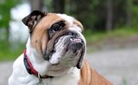 เจาะลึกการดูแล 5 ปัญหาสุขภาพที่พบในน้องหมาเลี้ยงยาก