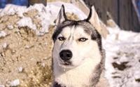 5 พฤติกรรมที่ทำให้ความสัมพันธ์ระหว่างคุณและน้องหมาต้อง พัง!!!!