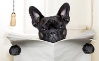 ผลวิจัยชี้ จุลินทรีย์ในอึ (อาจ) ช่วยพยากรณ์โรค IBD. ในสุนัขได้
