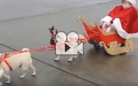 กวางเรนเดียร์กับซานต้ามาแล้ว โฮ่ง โฮ่ง โฮ่ง !!