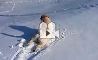 เมื่อตูบเจอหิมะนุ่ม ๆ ก็หยุดสไลด์ตัวไม่ได้จริง ๆ !!