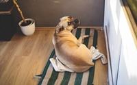 หาที่ฝากน้องหมาก่อนไปเที่ยวปีใหม่ รวมรายชื่อโรงแรมสุนัข - สถานฝากเลี้ยง ...