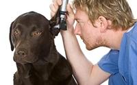 แป้งถอนขนหูสำหรับสุนัข
