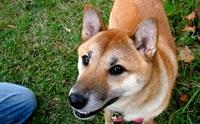 5 คาถาจำให้ขึ้นใจ ท่องไว้น้องหมาไม่มีดื้อ !!