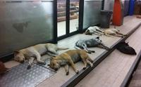 ไขข้อข้องใจ หน้าร้านสะดวกซื้อมีดีอะไร! ทำไมน้องหมาถึงชอบไปนอน
