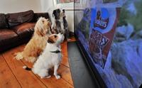 ย้อนรอย 5 รายการสุนัขดังในดวงใจที่ทุกคนต้องดูให้ได้