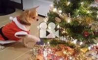 เทศกาลแห่งความสุข ห่อของขวัญ แต่งต้นคริสต์มาสรอเพื่อนดีกว่า !!