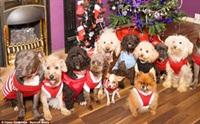 รวมภาพหล่าน้องหมาในฉลองปาร์ตี้คริสมาสต์