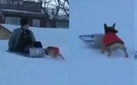 อดใจไม่ไหว! คลิปตูบสุดแสบแย่งเจ้าของเล่นเลื่อนหิมะ สไลด์ลงอย่างเซียน