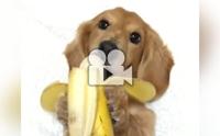 นอนกินกล้วยเป็นลิงเลยนะลูก !!