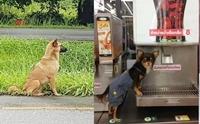 รวมสุดยอด 5 ข่าวดราม่าน้องหมาในปี 2016 !!