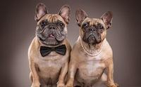 สุนัขเพศผู้หรือเพศเมีย...เลือกเลี้ยงเพศไหนดี ?