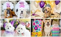 รวมภาพน้องหมาเค้าท์ดาวน์ ปาร์ตี้ปีใหม่