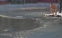 คลิปหนุ่มฮีโรถอดเสื้อผ้ากระโดดลงทะเลสาบน้ำแข็งช่วยชีวิตสุนัข !!