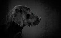 5 โรคพันธุกรรมยอดฮิตในน้องหมา