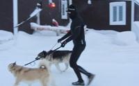 หนุ่มทนหนาวลุยหิมะทุกวันเพื่อจูงสุนัขในศูนย์พักพิงฯ ออกไปเดินเล่น !