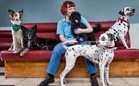 สาวผู้ดีทำตามฝันเปิดคลินิกรักษาสุนัขจรจัดให้เจ้าของคนไร้บ้านฟรี !!