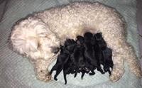เจ้าของเหวอ! แม่หมาตัวสีขาว แต่พอคลอดลูกกลายเป็นสีดำล้วนไปได้
