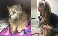 สาวขับรถยนต์ 2 ชม.เพื่อช่วยชีวิตสุนัขสูงวัยก่อนถูกการุณยฆาต !!