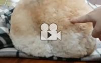 ก้นน่ารักแบบนี้ มาทายกันว่าเป็นน้องหมาพันธุ์อะไร?