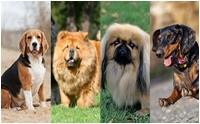 10 สายพันธุ์น้องหมา