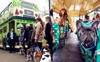เฮดังๆ! เปิดตัวรถบัสพาเจ้าตูบทัวร์รอบกรุงลอนดอนครั้งแรกในโลก