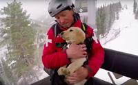 หน้าที่ยิ่งใหญ่! เจ้า Jake ลาบราดอร์ตัวน้อยฝึกทำหน้าที่กู้ภัยในลานสกี