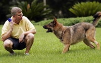 5 คำสั่งมีประโยชน์ ฝึกน้องหมาให้ช่วยเราทำงานได้!!