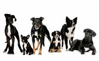 โดนไหม! 10 สุนัขพันธุ์ยอดฮิต ขวัญใจคนไทยตลอดกาล