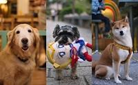 Dogilike review : ไต้หวัน ประเทศที่คนรักน้องหมาห้ามพลาด!!