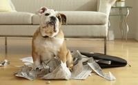 5 วิธีรับมือกับอารมณ์ 'ของขึ้น' เมื่อน้องหมาพังบ้าน!!