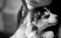 7 เรื่องราวความรักของน้องหมา ที่คุณต้องกลั้นน้ำตาเอาไว้ไม่อยู่