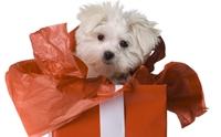 เหตุผลที่ไม่ควรซื้อน้องหมาเป็นของขวัญให้แฟน!!!