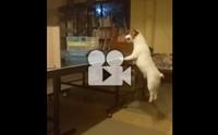 กระโดกตัวลอยเก่งแบบนี้ เป็นหมาหรือเป็นสปริงกันแน่ !!