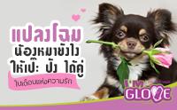 มาแปลงโฉมน้องหมาให้เป๊ะ ปัง กับเดือนแห่งความรักกันเถอะ !!